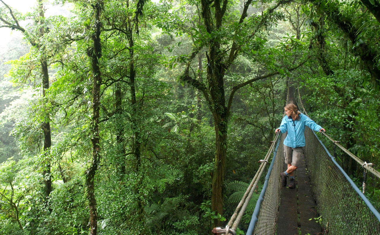 Factors To Consider To Ensure Safety During Your Trek In The Jungle